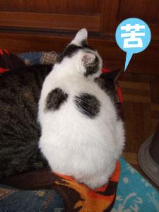 猫メンチを切る_a0064067_21475420.jpg