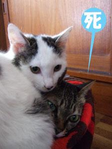 猫メンチを切る_a0064067_21482819.jpg