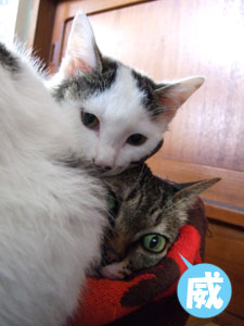 猫メンチを切る_a0064067_21484294.jpg