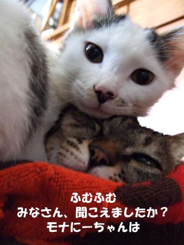 猫メンチを切る_a0064067_21485734.jpg