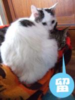 猫メンチを切る_a0064067_2148880.jpg