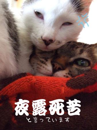 猫メンチを切る_a0064067_214995.jpg