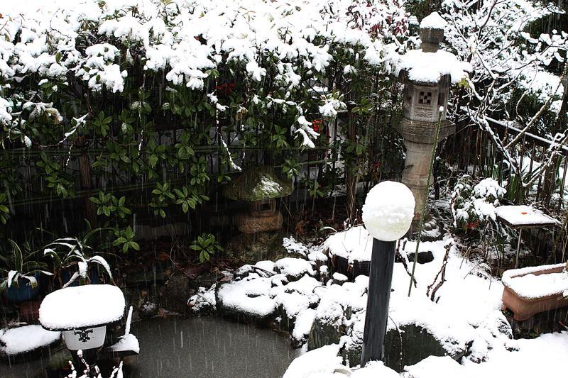 オナガ/降雪/天体ショー_b0024798_655321.jpg
