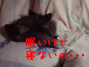 b0008709_1261180.jpg