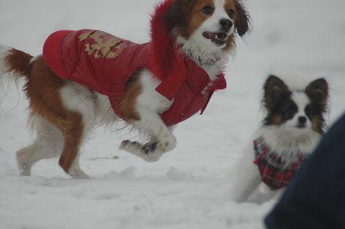 お待ちかねの雪♪_c0065512_1365148.jpg