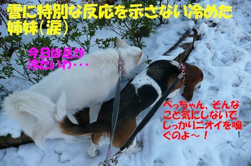 f0121712_9354365.jpg