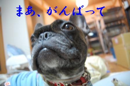 c0130324_0405096.jpg