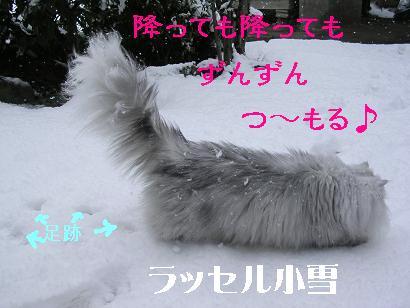 f0111467_15292026.jpg