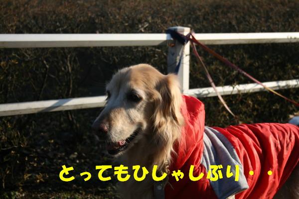 e0114977_1714158.jpg