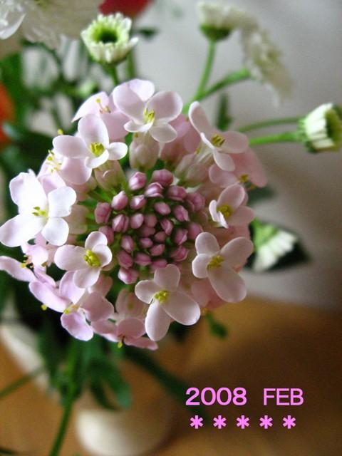 f0120483_1405052.jpg