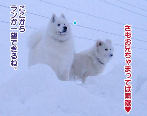 半月ぶりの獅子桃ショコラ_a0044521_2215062.jpg