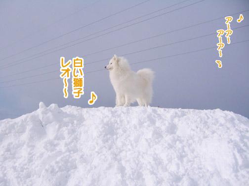 半月ぶりの獅子桃ショコラ_a0044521_22192461.jpg