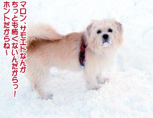 半月ぶりの獅子桃ショコラ_a0044521_2222579.jpg