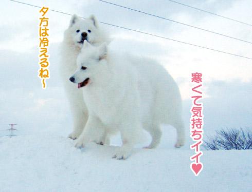 半月ぶりの獅子桃ショコラ_a0044521_22251867.jpg