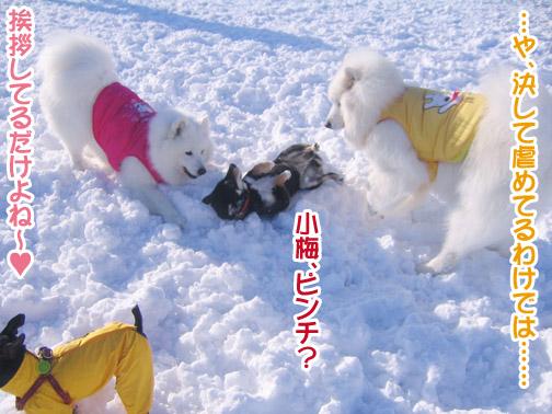 半月ぶりの獅子桃ショコラ_a0044521_22305091.jpg