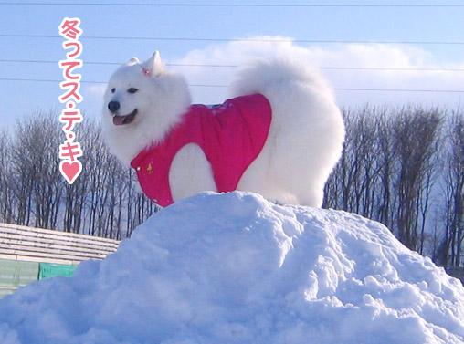 半月ぶりの獅子桃ショコラ_a0044521_22345688.jpg