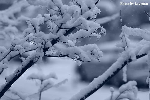 Snowy morning_c0136926_8222553.jpg