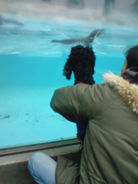 動物園 後編♪_f0096569_2203616.jpg