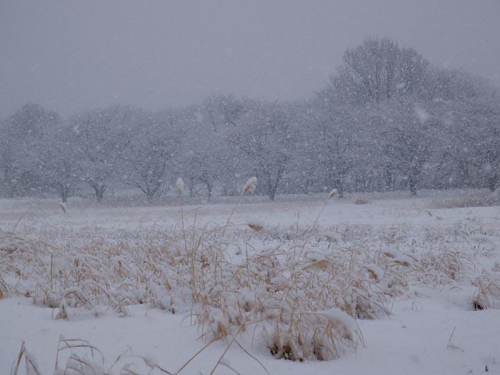 木々や草に雪の華が咲く!_c0137403_18392991.jpg