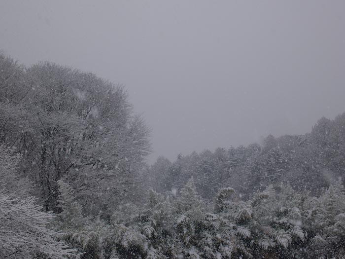 木々や草に雪の華が咲く!_c0137403_18394259.jpg