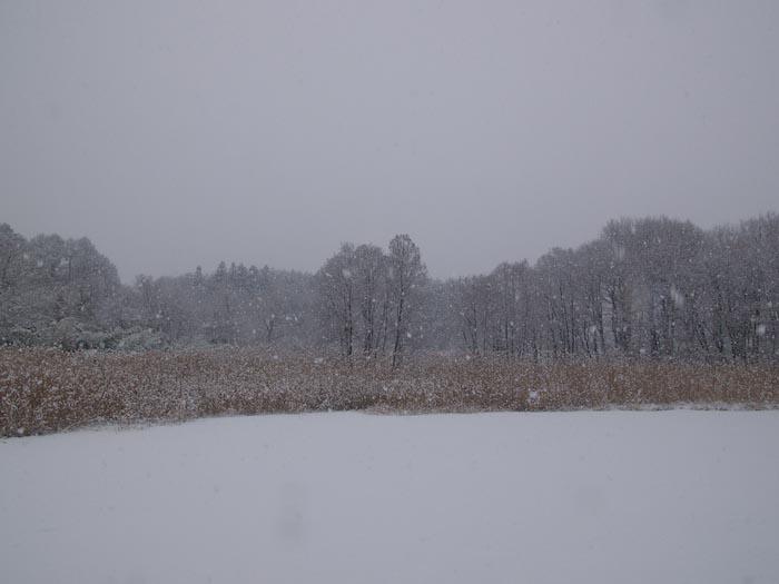 木々や草に雪の華が咲く!_c0137403_18401952.jpg