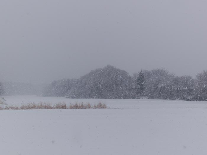 木々や草に雪の華が咲く!_c0137403_18405219.jpg