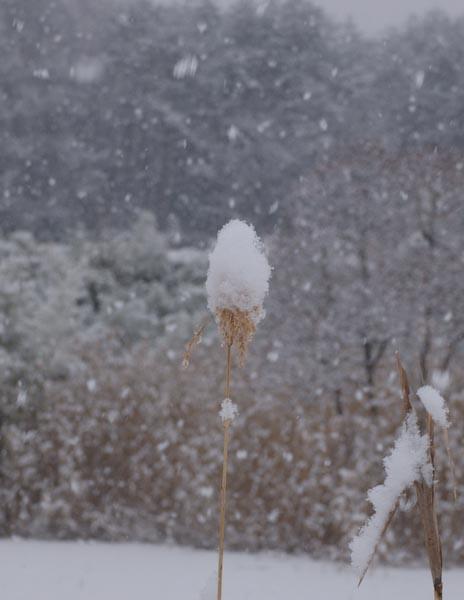 木々や草に雪の華が咲く!_c0137403_18411686.jpg