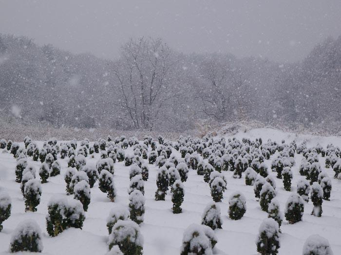 木々や草に雪の華が咲く!_c0137403_1841295.jpg