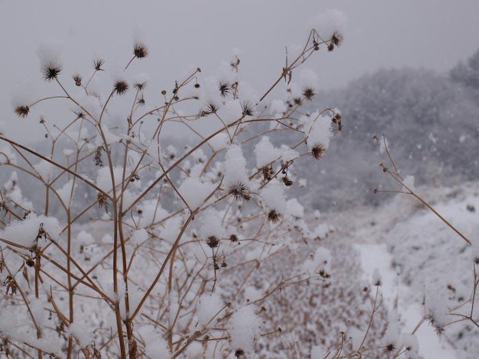 木々や草に雪の華が咲く!_c0137403_18414188.jpg