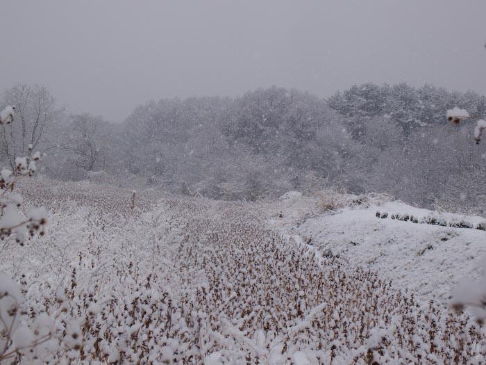 木々や草に雪の華が咲く!_c0137403_18415631.jpg