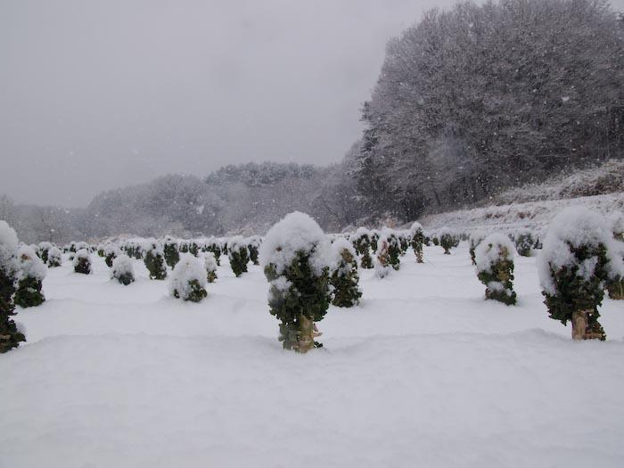 木々や草に雪の華が咲く!_c0137403_18422254.jpg