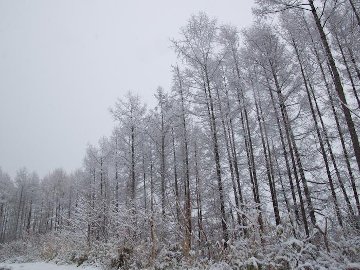 木々や草に雪の華が咲く!_c0137403_1842519.jpg