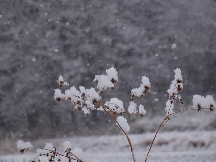 木々や草に雪の華が咲く!_c0137403_1842972.jpg