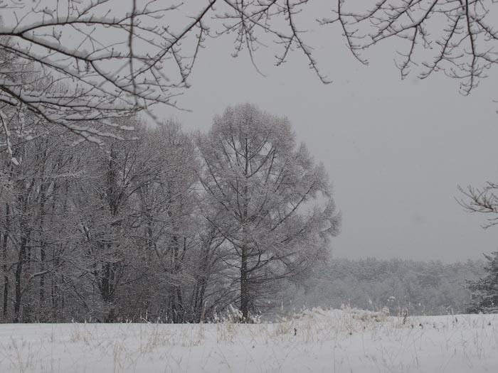 木々や草に雪の華が咲く!_c0137403_18451721.jpg