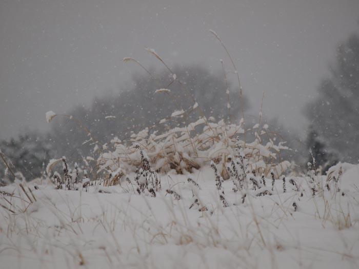 木々や草に雪の華が咲く!_c0137403_18461043.jpg
