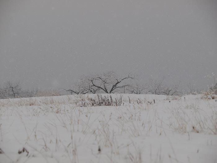 木々や草に雪の華が咲く!_c0137403_1846212.jpg
