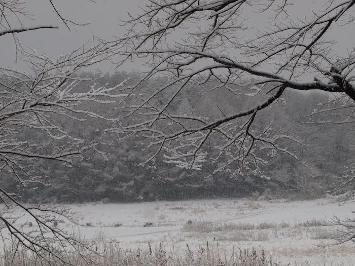 木々や草に雪の華が咲く!_c0137403_18463471.jpg