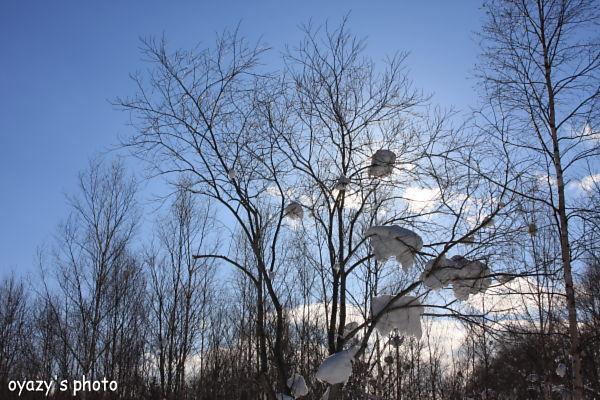 雪様々_a0071514_20502949.jpg
