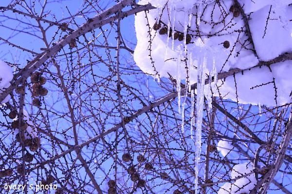 雪様々_a0071514_20504260.jpg