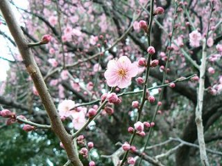 東京も雪_f0019247_0595843.jpg