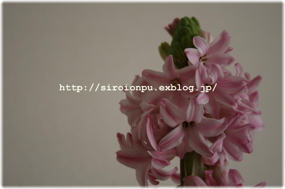 d0143461_2040198.jpg