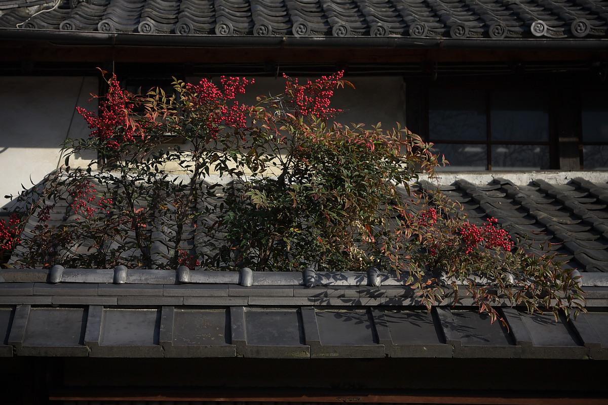 京都スナップ 6 <建仁寺>_f0021869_14424743.jpg