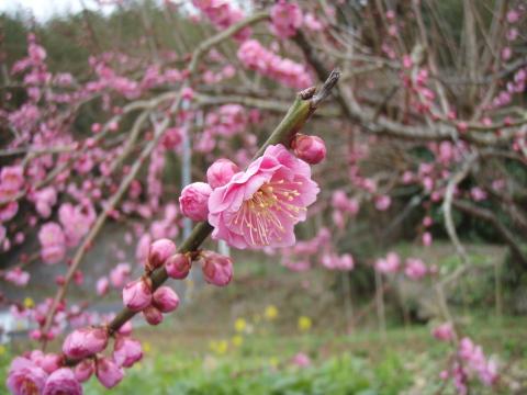 春よ来い_a0077071_1854110.jpg