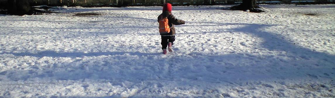 雪の後は、わびすけの花を楽しむ_a0107574_19333358.jpg