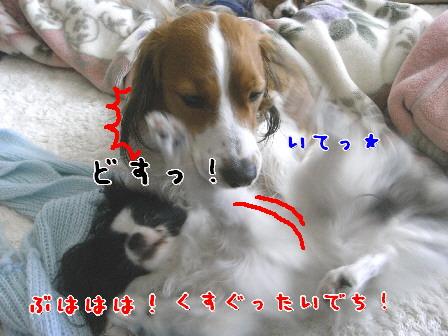 d0013149_8471848.jpg