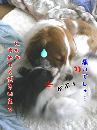 d0013149_8544838.jpg
