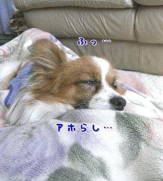 d0013149_8581449.jpg