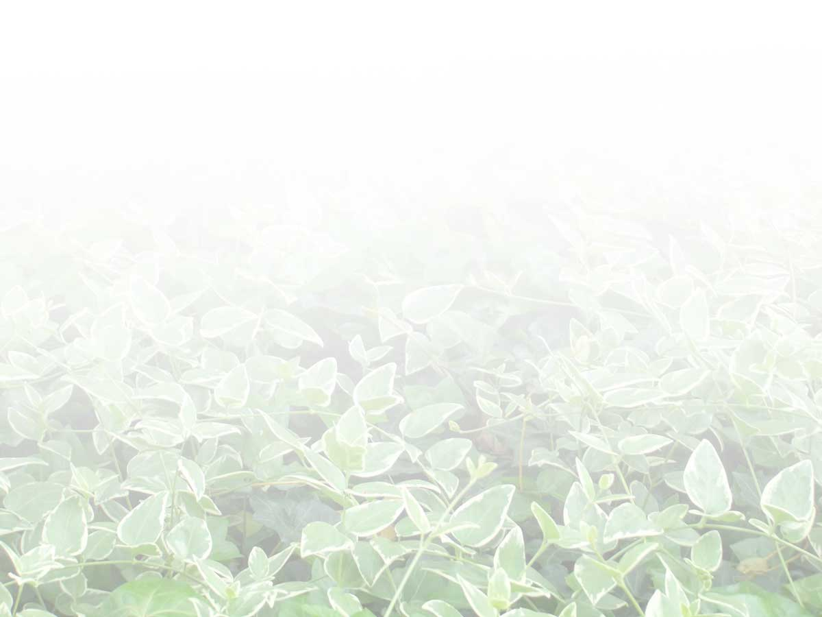 b0046204_1684674.jpg