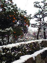 雪!雪!雪!_e0103327_1674273.jpg