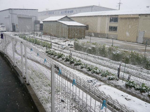 雪やこんこん~♪_b0077531_23351119.jpg